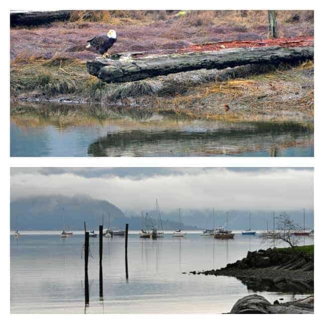 Seaside estuary images