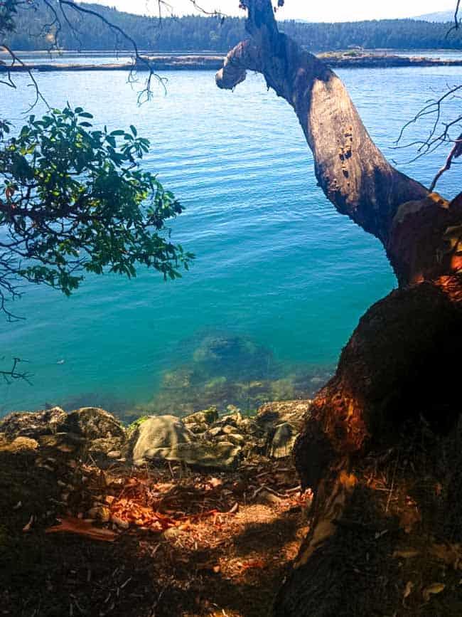 Wallace Island. Citrus Chardonnay-Glazed Salmon. |www.flavourandsavour.com