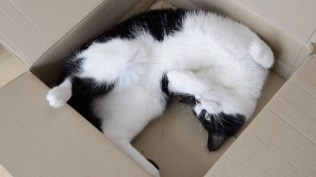 Felix playing in his box