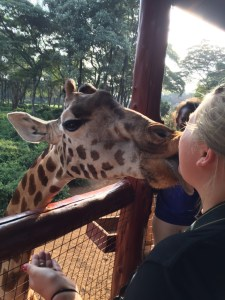 A trip to Africa wouldn't be complete without being head-butted or kissed by a giraffe.