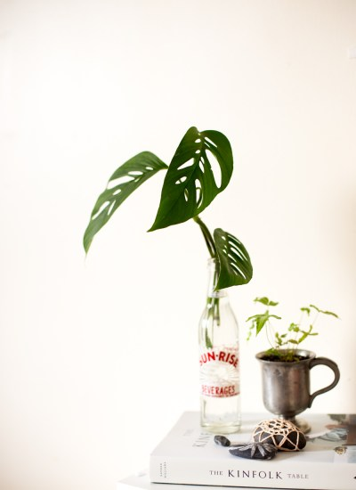 Plant Cuttings In Water – Care and How To