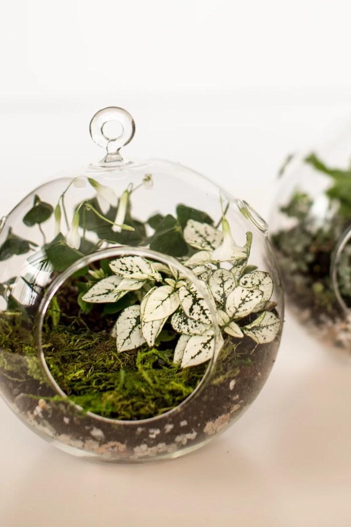 Miniature Terrarium DIY
