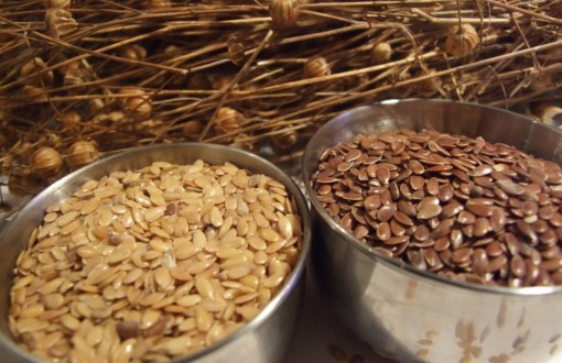 Gold and brown linseed or flax