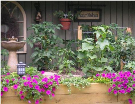Annie's kitchen garden