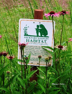 Backyard Habitat sign