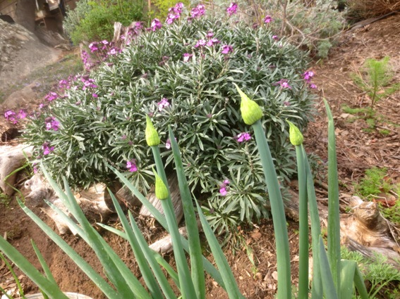 My Green Onion Farm Flea Market Gardening