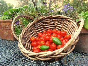 Another basket to eat, dry or freeze