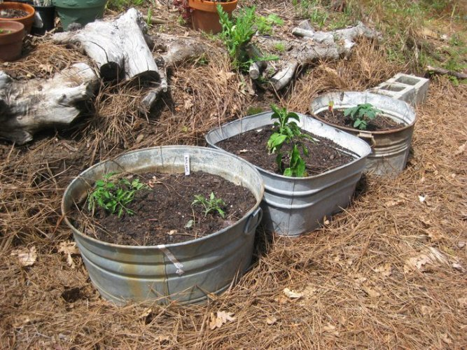 i mixed all the different soils I had just like it says in the Square Foot Gardening book.
