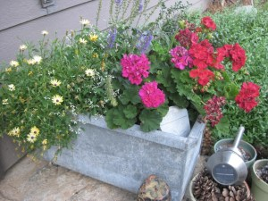 Old galvanized planter by the front door