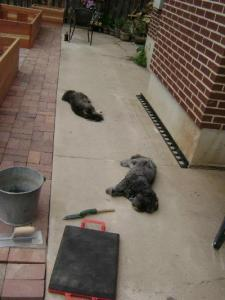 Laying pavers all day in the heat makes a guy dog gone tired