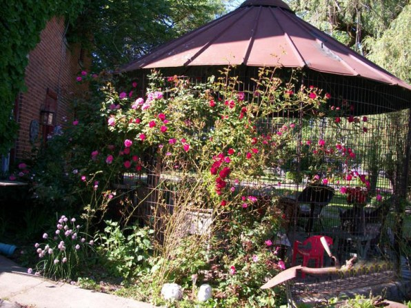 Climbing roses reach for the corncrib's 'trellis' sides