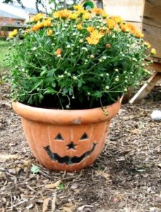 This pumpkin flower pot makes us laugh!