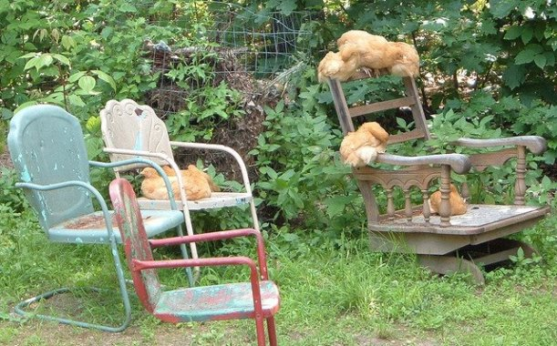 """My sweet girlies lounging on grammy chairs in the garden...."""