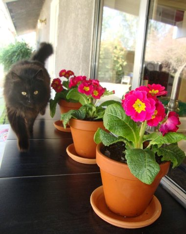 Squirrelly the Cat prowls close to the pots on the ledge. Photo by Jane Krauter