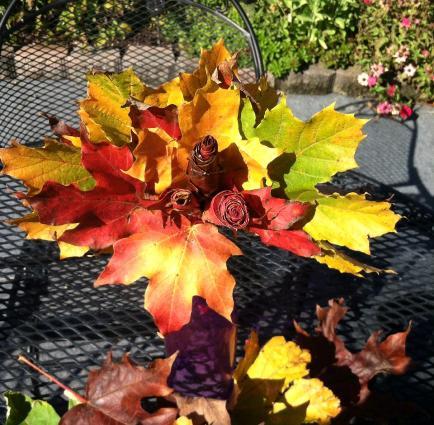 Karen Olin Proscia Maple leaf roses