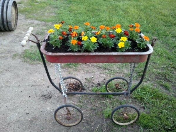 Buggy or wagon