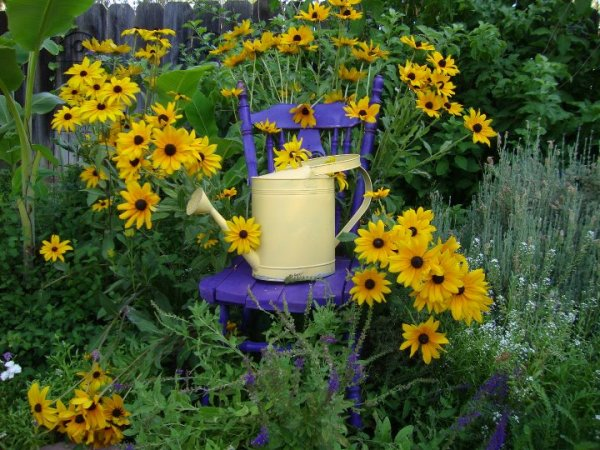 Jane Krauter's purple chair and Black-eyed Susans