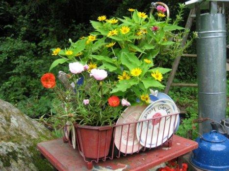 Barbara's 'Dish Garden'