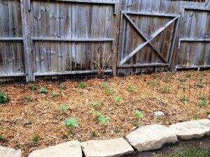 Brian's veggie garden