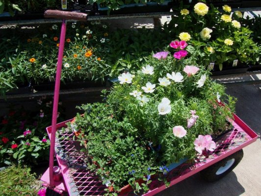 Nursery shopping is one of my favorite things...then planting…