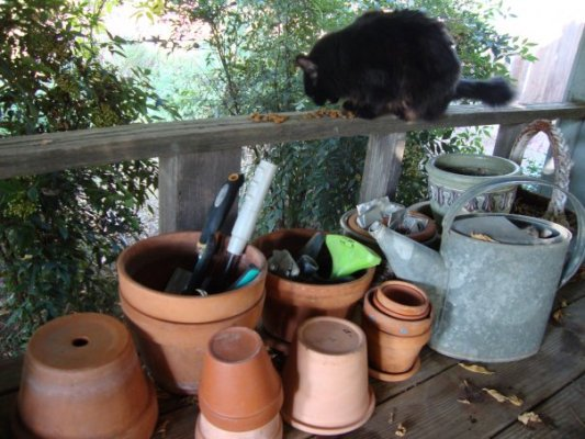 I get a treat after stacking all the pots away....
