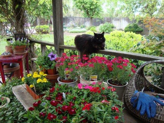 Supervising Spring planting....
