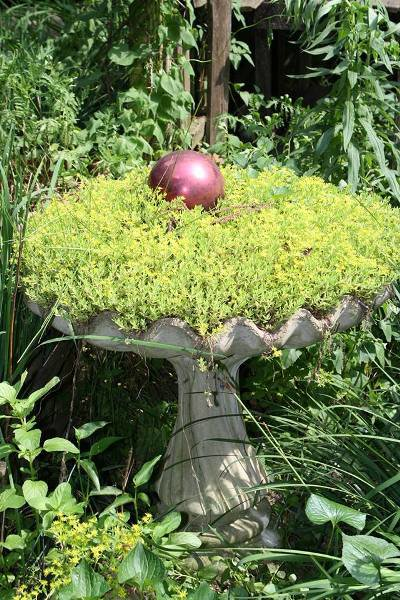 """Bobbi Doll-  """"It's been a great year for my sedum"""""""