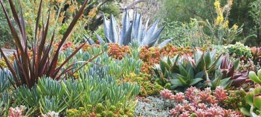 Debras garden