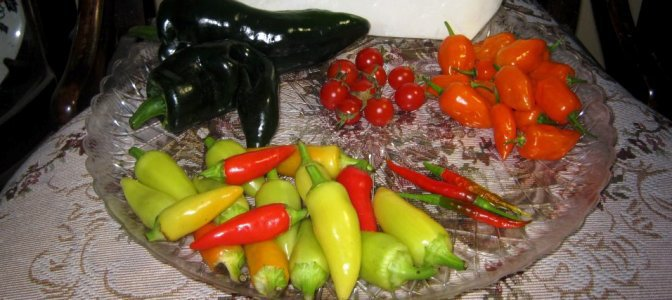 Brian Stephan's hot peppers
