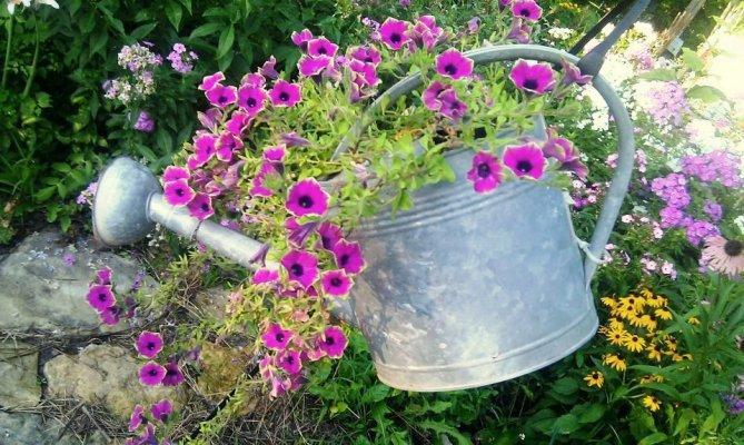 Vintage watering cans in the garden  Flea Market Gardening