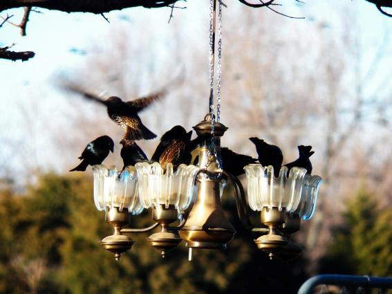 Jan Brown's bird feeder