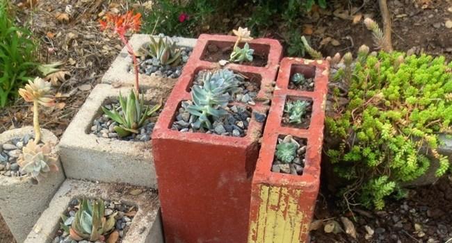 Plant puzzles