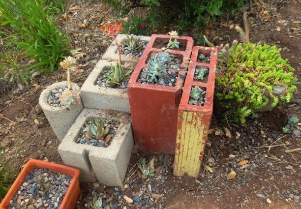 Succulent 'plant puzzle'