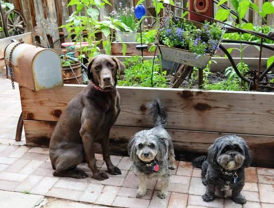 Marie's garden helpers