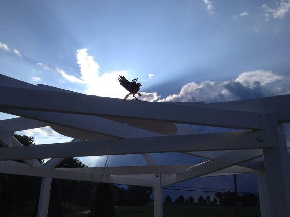 From drawing board to dream come true. Toni's bird arbor