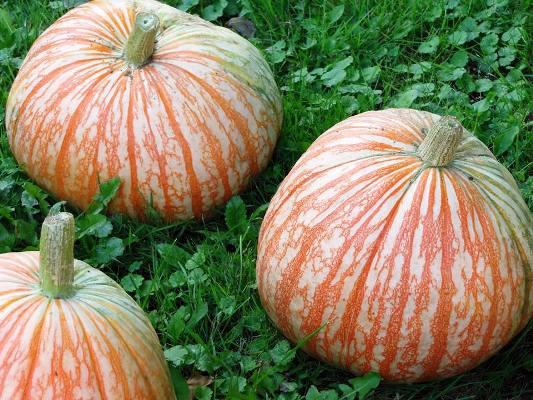Pumpkin totems stacks and towers  Flea Market Gardening