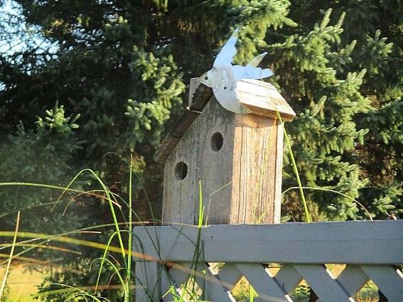 Guardería Secreta Garden Birdhouse - Notas y Planes de mi Build | HACERLO: Proyectos, planes y procedimientos