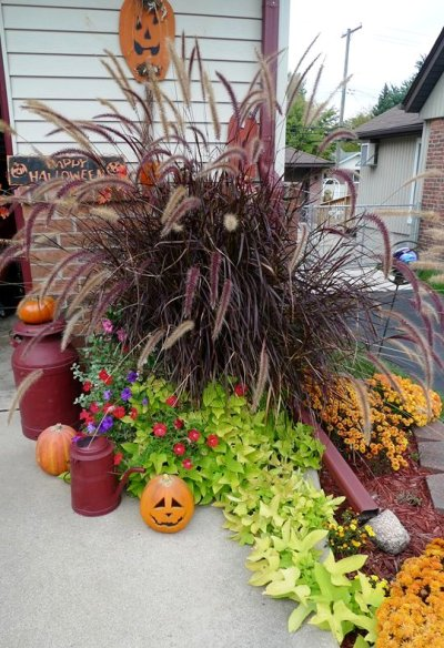 Janice Cusmano's purple Fountain grass