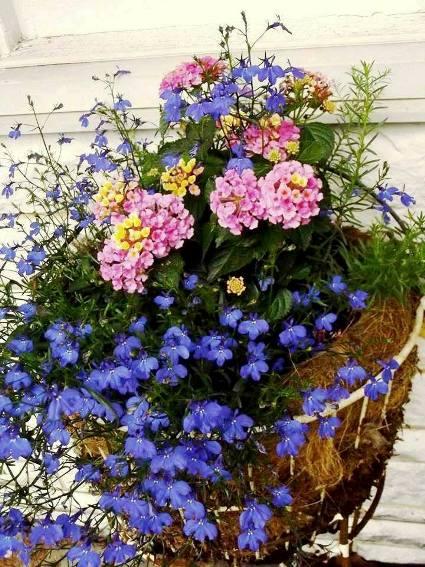 Darlene Danielson Moss-lined basket