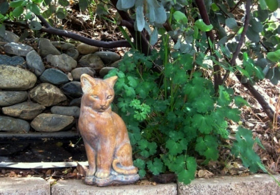 Serene cats are always welcome in the garden