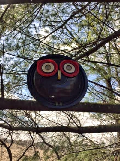 Myra's black owl in the pine tree