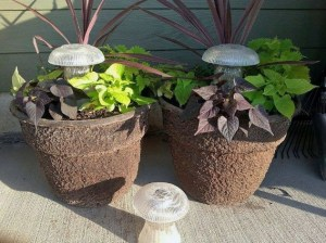 in pots
