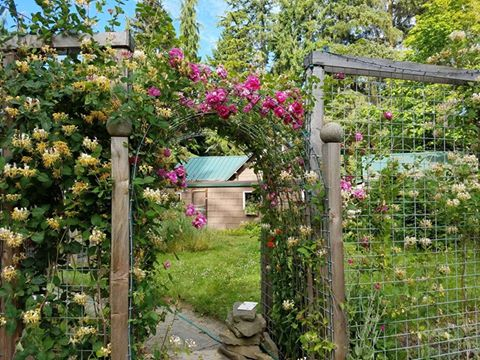 Tina Reaume's trellis fence 2017 update