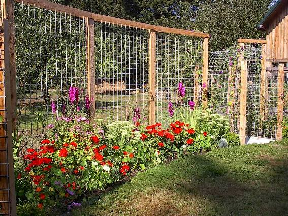 Tina Reaume's trellis fence