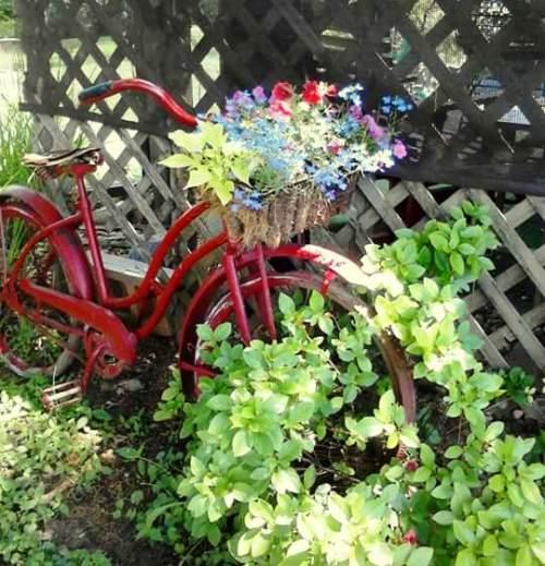 Melinda Moore My garden bike