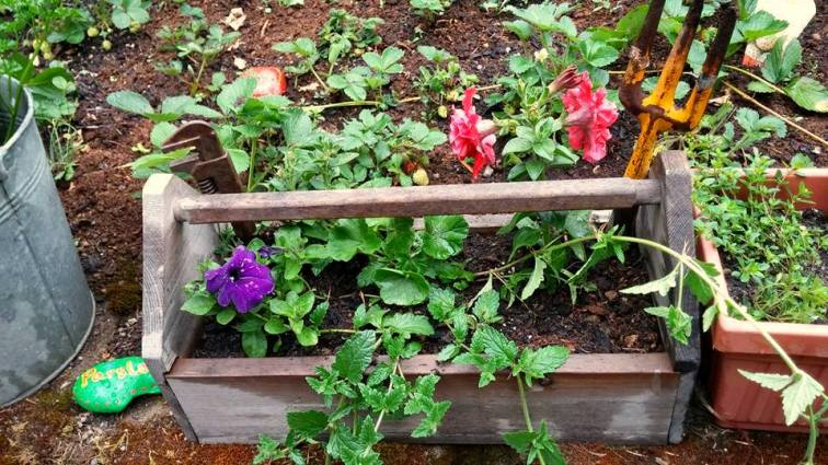 Sandi Fleury's planter box