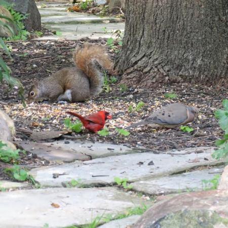 The wildlife is abundant in the Wickline gardens