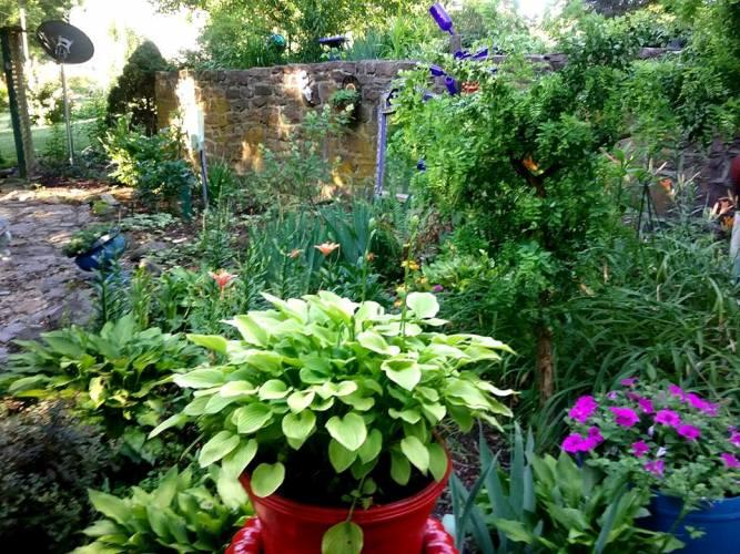 Josephine Alexander's garden