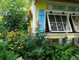 Dandi Gentry's chicken coop garden (28)