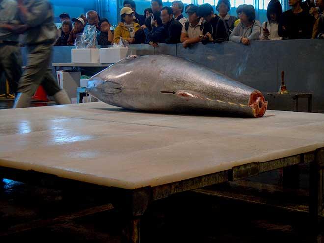 tuna-filleting